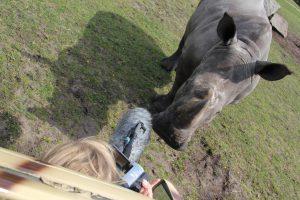 Audio- und Videoaufnahmen von Rufe des Breitmaulnashorn