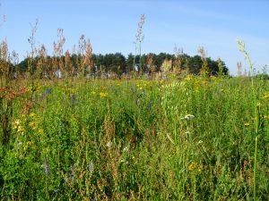 Artenreiche Wildblumenwiese Tiere